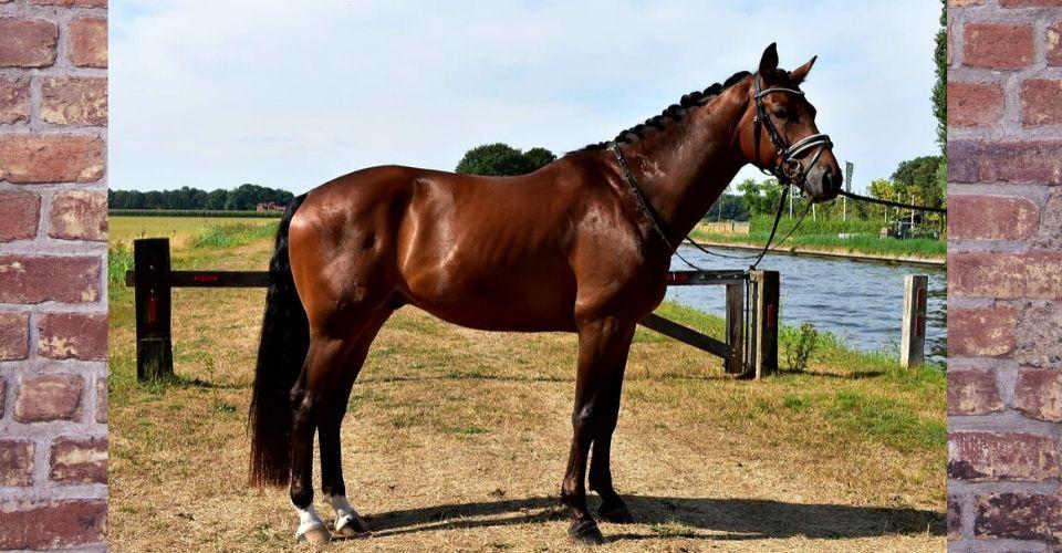 Behandeling van een paard (1)